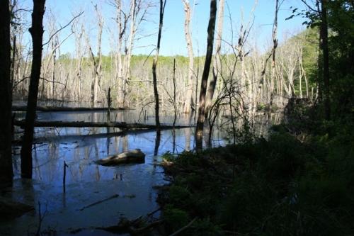 Nayantaquit Trail wetland.