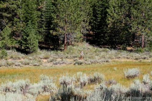 2013_Tahoe Rim Trail Endurance Runs 1250