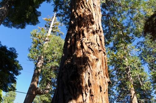 2013_Lake Tahoe Trip (M9) 118