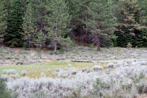 2014_Tahoe Rim Trail Enduranc Runs 982